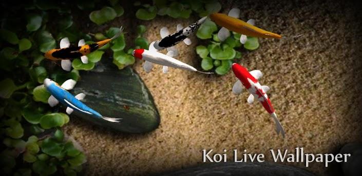 Koi Free Live Wallpaper