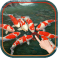 Magic Touch : Koi Fish