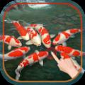 Magic Touch : Koi Fish