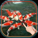 Magic Touch  Koi Fish (3)